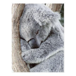 Schlafendes Koalababy Postkarte