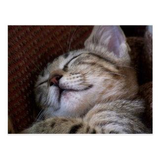 Schlafenkätzchen Postkarte