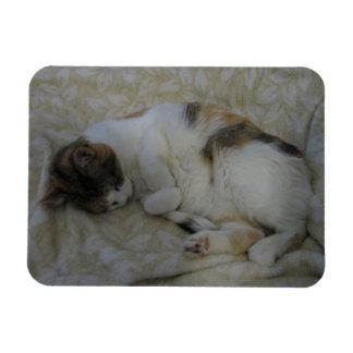 Schlafenkatze Magnet