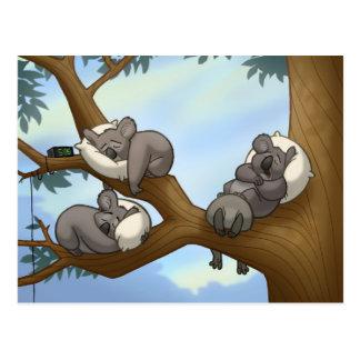 Schlafenkoala-Postkarte