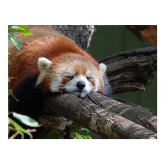 Schlafenpanda-Bärn-Postkarte Postkarte