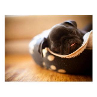 Schlafenschwarzer chinesischer Mops-Welpen-Hund Postkarte