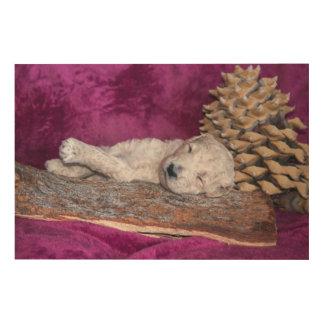 Schlafenstandardpudel-Welpe Holzwanddeko