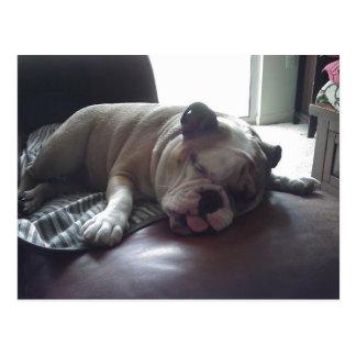 Schläfrige Bulldogge Postkarte