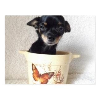 Schläfrige Chihuahua Postkarte