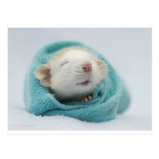 Schläfrige Ratte Postkarte
