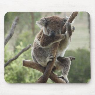 Schläfriger Koala Mousepad