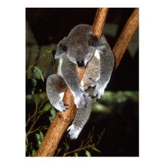 Schläfriger Koala Postkarte