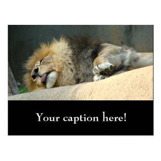 Schläfriger Löwe, der heraus die Zunge haftet Postkarte