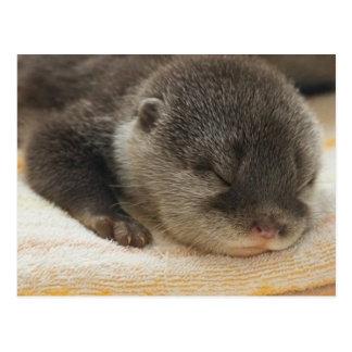 Schläfriger Otter Postkarte