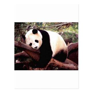 Schläfriger Panda Postkarte