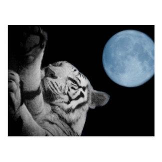 Schläfriger Tiger Postkarte