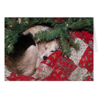 Schläfriger WeihnachtsBeagle Grußkarte