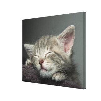 Schläfriges Kätzchen Leinwanddruck