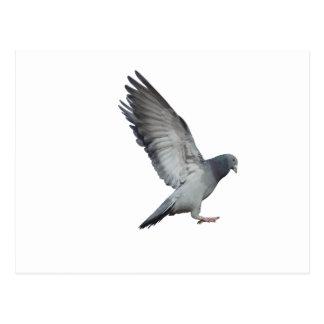 Schlägt Flügel Postkarte