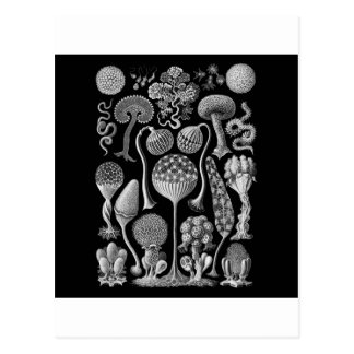 Schlamm-Formen in Schwarzweiss Postkarte