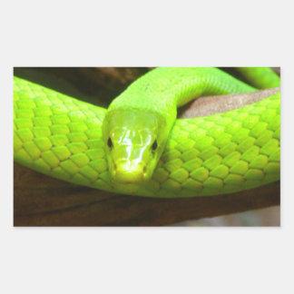 Schlangegrüner Mamba-tierisches beängstigendes Par Rechrteckaufkleber