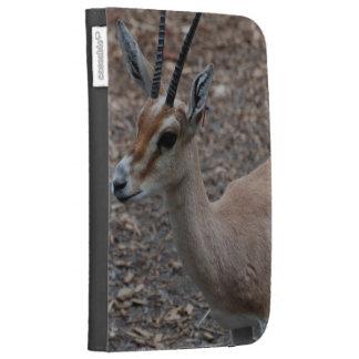 Schlanke gehörnte Gazelle zünden Kasten an