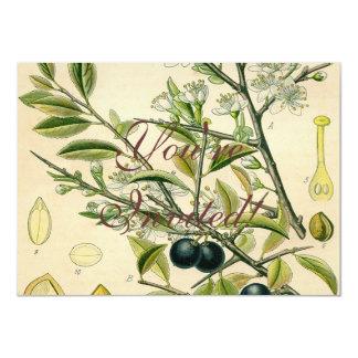 Schlehdorn-botanische Pflanzen-Illustrations-Kunst 11,4 X 15,9 Cm Einladungskarte