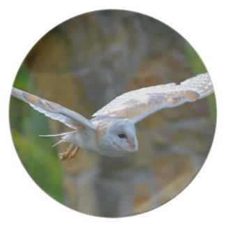 Schleiereule-Fliegen Teller