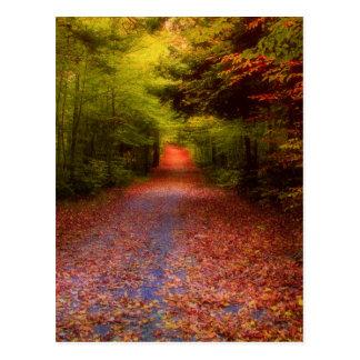 Schlucht-Wald Postkarte