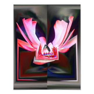 Schmetterling abstrakt photographien