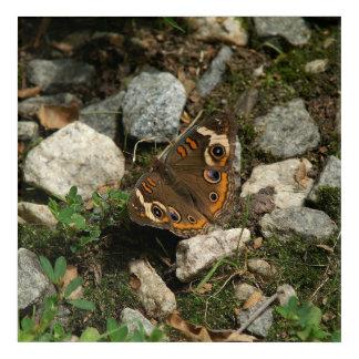 Schmetterling, Acryldruck