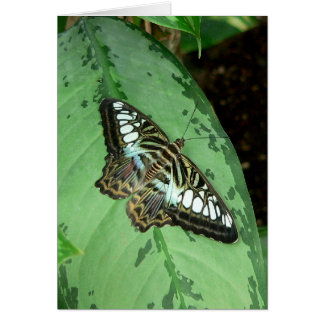 Schmetterling auf Blatt Karte