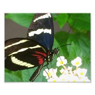 Schmetterling auf Blumenphotographie Fotodruck