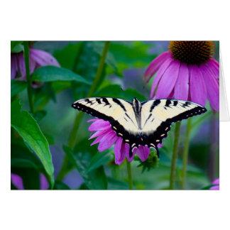 Schmetterling auf Coneflower Karte