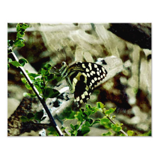 Schmetterling auf einem Zweig Fotodruck
