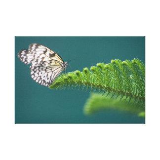 Schmetterling auf einer Niederlassung Leinwanddruck