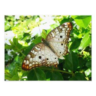 Schmetterling auf Jasmin-tropischer Fotodruck