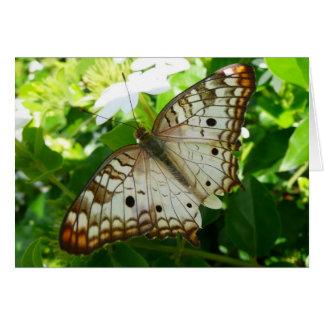 Schmetterling auf Jasmin-tropischer Grußkarte