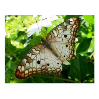 Schmetterling auf Jasmin-tropischer Postkarten
