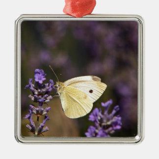 Schmetterling auf Lavendel Silbernes Ornament