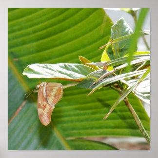 Schmetterling auf Pflanze Poster