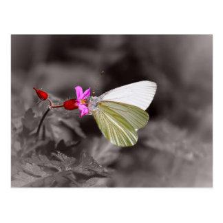 Schmetterling auf rosa Blume Postkarten
