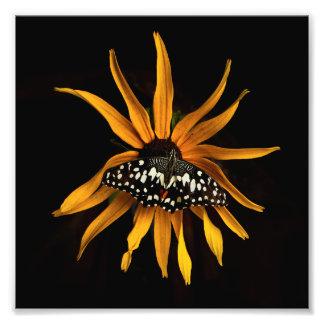 Schmetterling auf Sonnenblume Fotodruck
