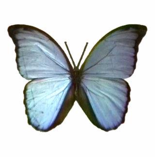 Schmetterling blaues Freiburg Deutschland das Fotoskulptur Button