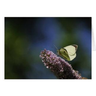 Schmetterling Bush Karte