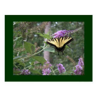 Schmetterling Bush mit Schmetterling Postkarte