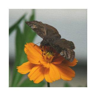 Schmetterling, eingewickelter Leinwand-Druck Leinwanddruck