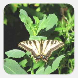 Schmetterling, Folsom, Kalifornien Quadratischer Aufkleber