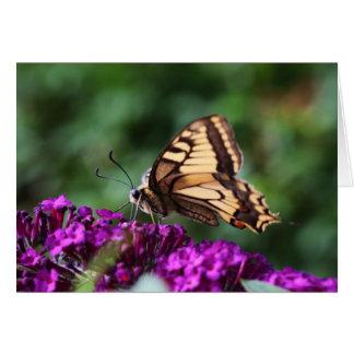 Schmetterling Grußkarten