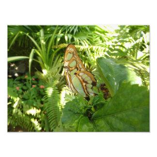 Schmetterling in der tropischen fotos