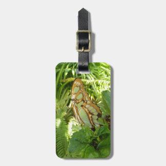 Schmetterling in der tropischen gepäckanhänger