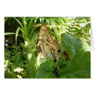 Schmetterling in der tropischen grußkarte