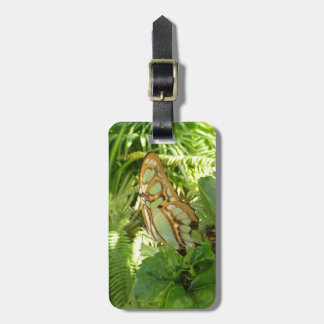 Schmetterling in der tropischen kofferanhänger