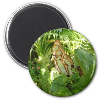 Schmetterling in der tropischen runder magnet 5,7 cm